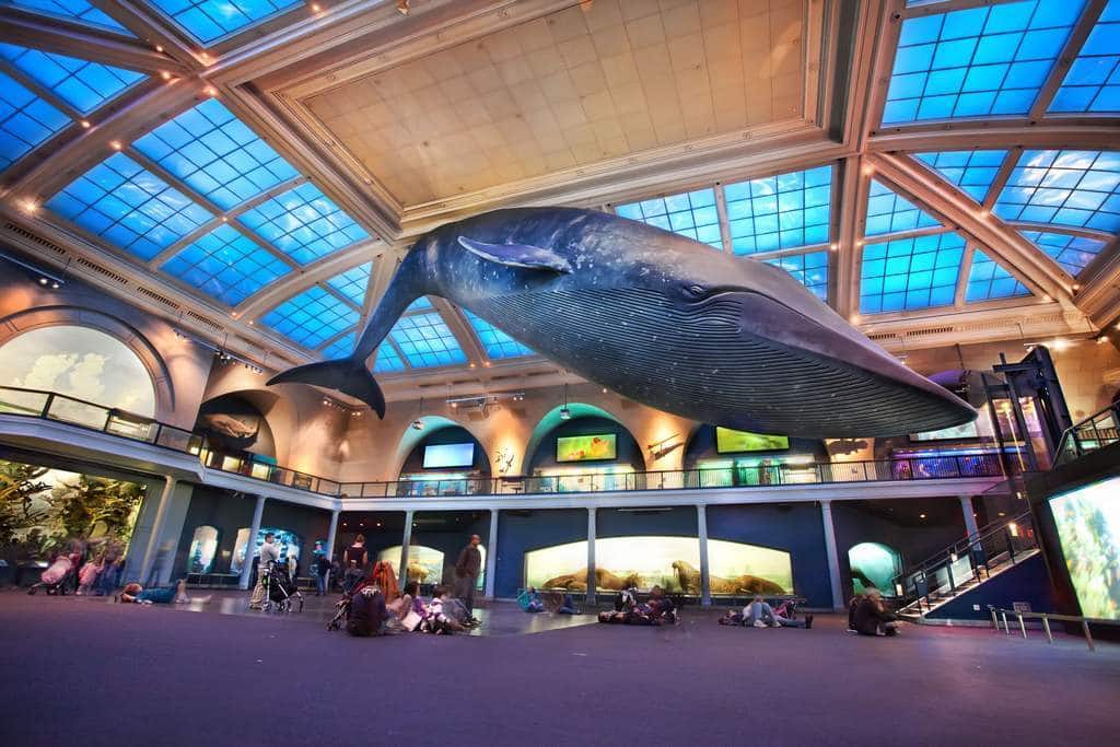 Museos De New York Donde Pagar Menos Y Ahorrar Más