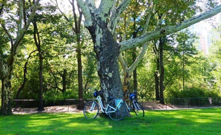 Parques en New York - Ir en bicicleta
