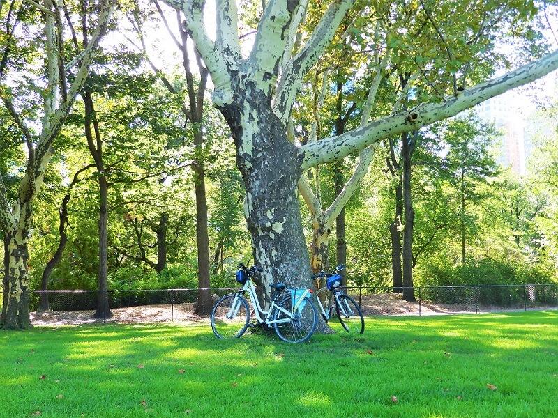 Alquilar Bicicletas en Nueva York